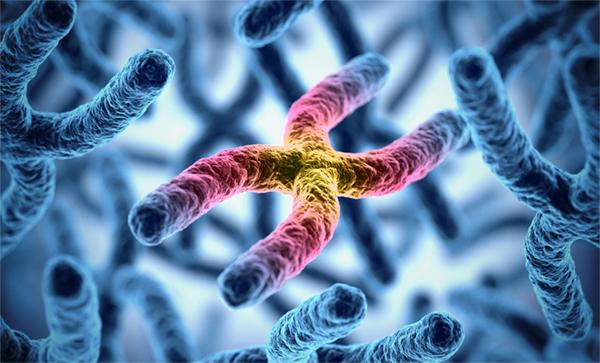 Expertos Andaluces descubren nuevos mecanismos que contribuyen a la estabilidad del ADN