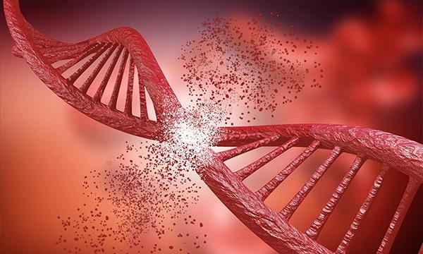 Investigadores de la US y Cabimer identifican un nuevo mecanismo de reparación de roturas del ADN
