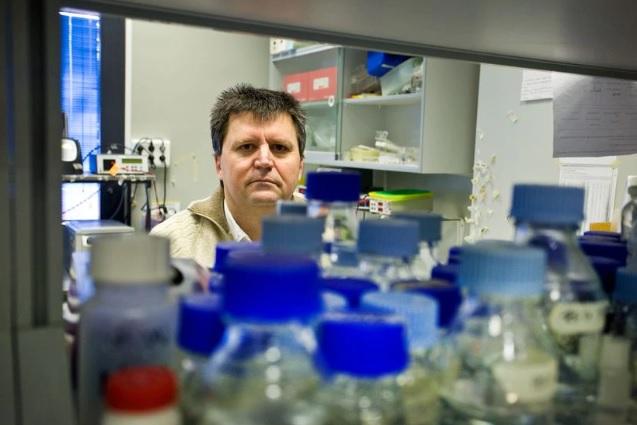 Identificado el mecanismo de una de las mutaciones más frecuentes en los tumores